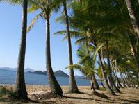 Stately Palm